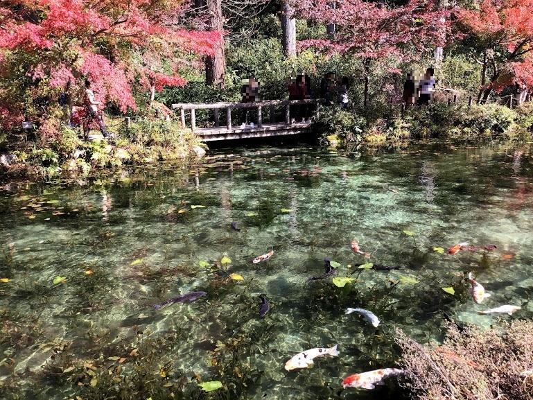 モネの池と紅葉と橋の風景