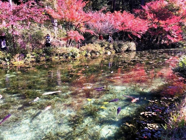 モネの池と紅葉の風景